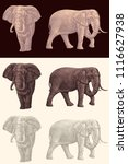 elephants. design set. hand... | Shutterstock .eps vector #1116627938