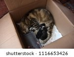 Homeless Cat With Kittens In A...