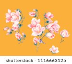 magnolia flower illustration | Shutterstock .eps vector #1116663125