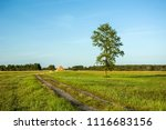 road through a meadow and... | Shutterstock . vector #1116683156