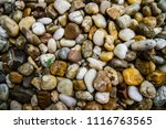 detail on stones with plant  | Shutterstock . vector #1116763565