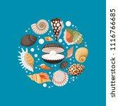 cartoon sea shells and white...   Shutterstock .eps vector #1116766685
