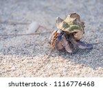 terrestrial hermit crab walking ... | Shutterstock . vector #1116776468
