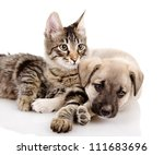 Stock photo portrait of a cat and dog isolated on a white background 111683696