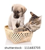 Stock photo cat and dog in basket isolated on white background 111683705