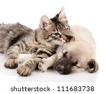 Stock photo cat and dog together isolated on white background 111683738