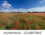 sunset over field with red... | Shutterstock . vector #1116847862