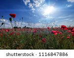 sunset over field with red... | Shutterstock . vector #1116847886