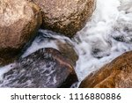 close up details of tropical... | Shutterstock . vector #1116880886