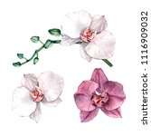 watercolor orchid branch  hand... | Shutterstock . vector #1116909032