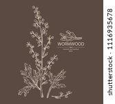 wormwood  wormwood branch ... | Shutterstock .eps vector #1116935678