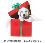 Stock photo a yellow lab puppy in a gift box for christmas 1116945782