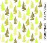 fern frond herbs  tropical... | Shutterstock .eps vector #1116972062