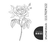 Stock vector beautiful hand drawn rose vector illustration great for greeting cards backgrounds wedding 1117029122