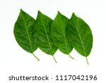 four overlay green leafs... | Shutterstock . vector #1117042196
