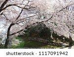spring cherry blossom | Shutterstock . vector #1117091942