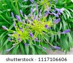 fresh natural flower in bright... | Shutterstock . vector #1117106606