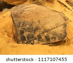 Small photo of Prehistoric rock engravings in Taghit, Bechar, Algeria.