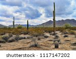 the sonora desert in central... | Shutterstock . vector #1117147202