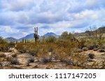saguaro cactus cereus giganteus ... | Shutterstock . vector #1117147205