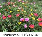 beautiful vibrant colorful... | Shutterstock . vector #1117147682