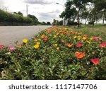 beautiful vibrant colorful... | Shutterstock . vector #1117147706