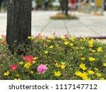 beautiful vibrant colorful... | Shutterstock . vector #1117147712