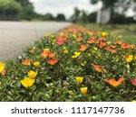 beautiful vibrant colorful... | Shutterstock . vector #1117147736