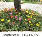 beautiful vibrant colorful... | Shutterstock . vector #1117147772