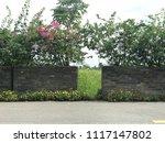 beautiful vibrant colorful... | Shutterstock . vector #1117147802