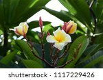 colorful flowers.group of... | Shutterstock . vector #1117229426