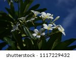 colorful flowers.group of... | Shutterstock . vector #1117229432