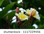 colorful flowers.group of... | Shutterstock . vector #1117229456