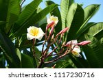 colorful flowers.group of... | Shutterstock . vector #1117230716