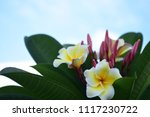 colorful flowers.group of... | Shutterstock . vector #1117230722