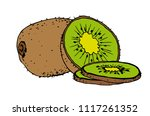 kiwi fruit  vector illustration ... | Shutterstock .eps vector #1117261352
