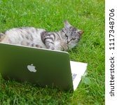 texel  dutch   5 june 2018. ...   Shutterstock . vector #1117348706