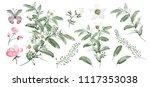 watercolor.  botanical... | Shutterstock . vector #1117353038