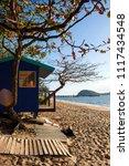 palm beach  north queensland ... | Shutterstock . vector #1117434548