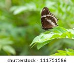 A beautiful butterfly sitting in the tree - stock photo