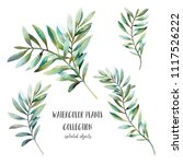 Watercolor plants with long leaves set. Hand painted floral clip art: branches isolated on white background.