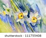 Daffodils. Watercolor.