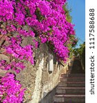 Colorful Pink Flowers And Old...