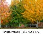 Fall Foliage Colors At Park...