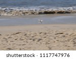 surf on the north sea coast off ... | Shutterstock . vector #1117747976