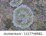 lichen on a tree | Shutterstock . vector #1117748882
