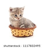 Stock photo kitten in a basket isolated on a white background 1117832495