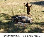 barro  pontevedra   spain   10...   Shutterstock . vector #1117877012
