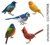 birds set watercolor painting ... | Shutterstock . vector #1117909508