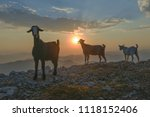 goats who live and feed on high | Shutterstock . vector #1118152406